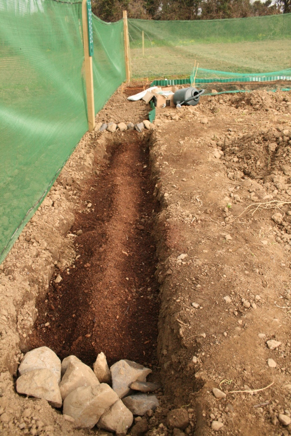 This is my trench from two years ago, it's well established now, but it will give you and idea of how I did it. Funny looking at it now, the ground looks so barren, amazing how much has changed in two years.