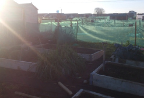 The plot in glorious winter sunshine. Not how I expected it to look mid-winter.