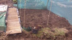 My future herb garden