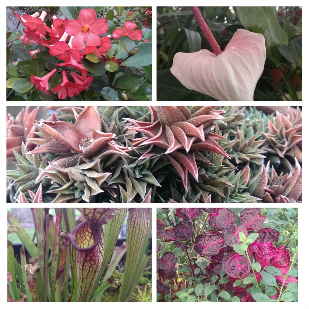 Just some of the beautiful plants on show