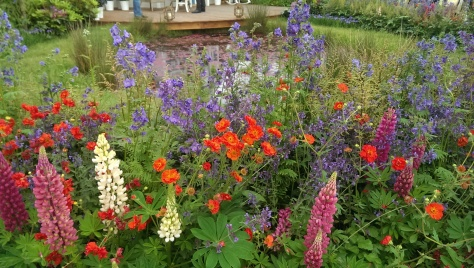 Lupins were definitely the star of the show