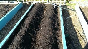 Planting my spuds